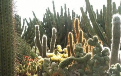 Cactus-Country