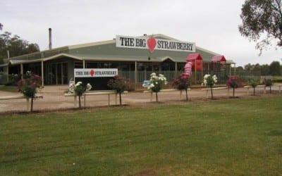 The-Big-Strawberry